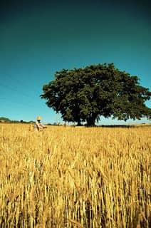 TGS Harvest Autumn