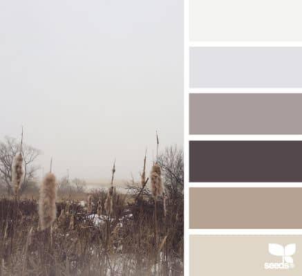 Gray Seeds