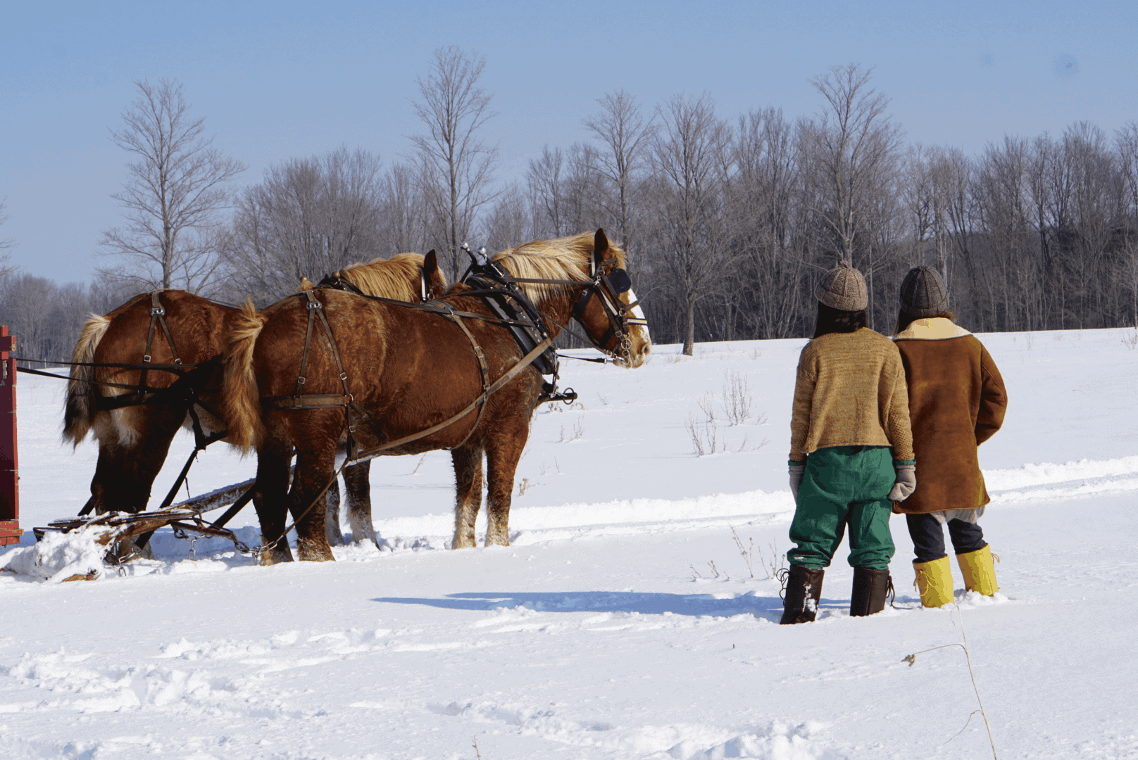 Two people wearing knitted items stand in snow next to horses.