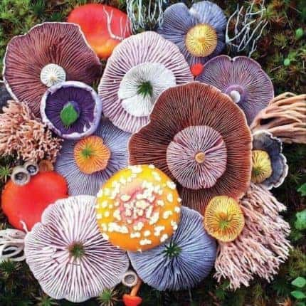 A collection of colorful mushrooms.