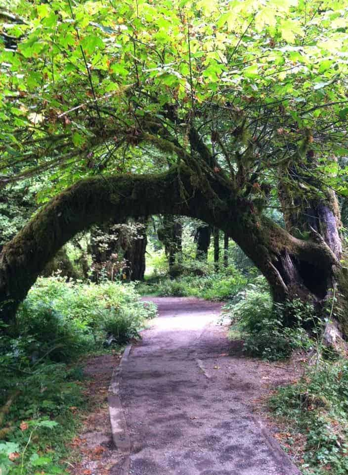 A tree arches over a forest trail.