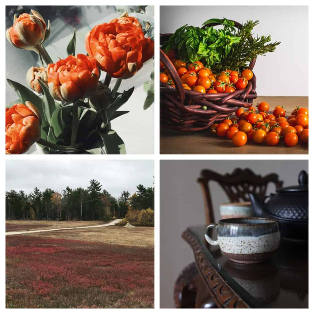 A collage with a orange flowers, cherry tomatoes, a ceramic mug and a field of blueberries.