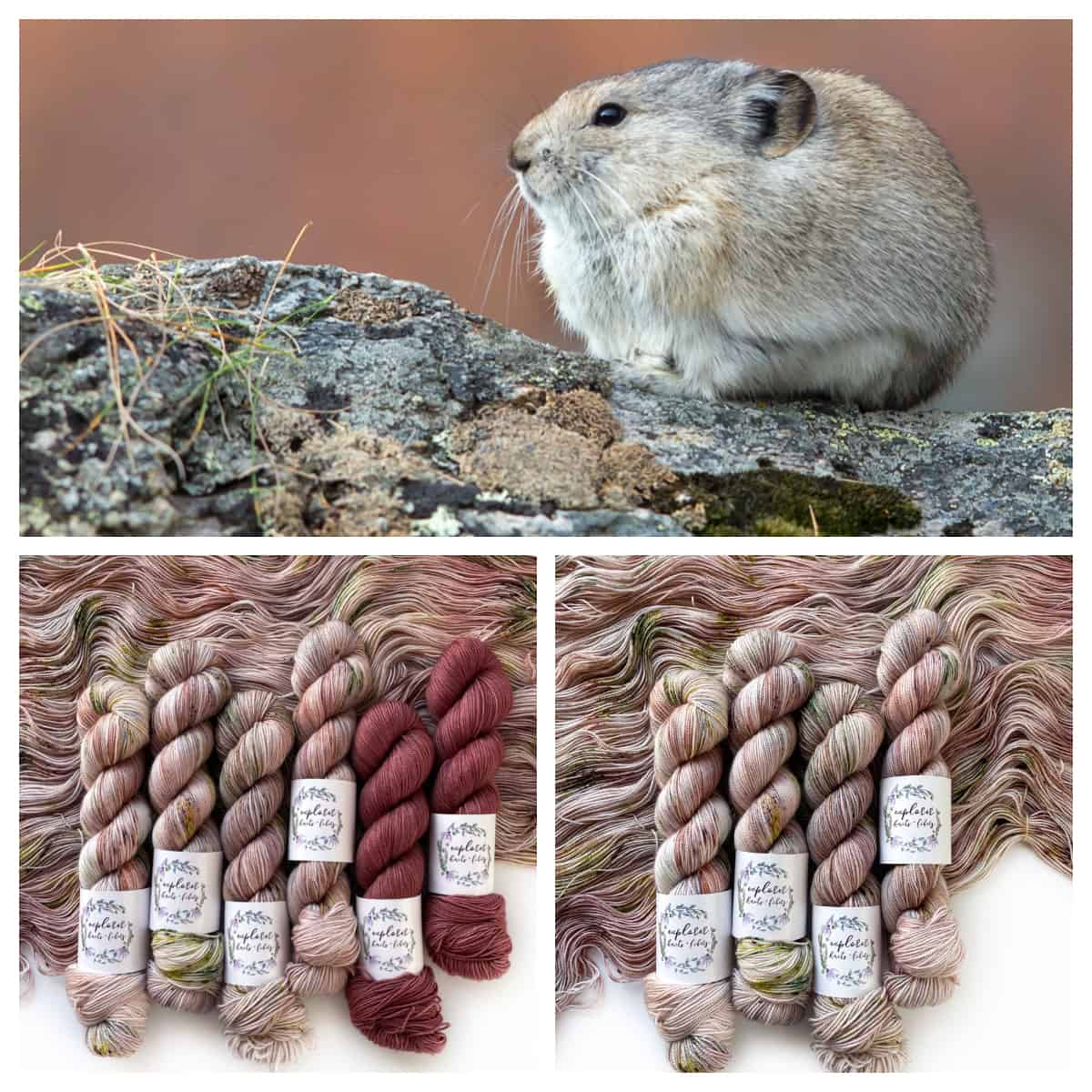 A furry rodent on a mossy rock, and skeins of pink and pink and green speckled yarn.